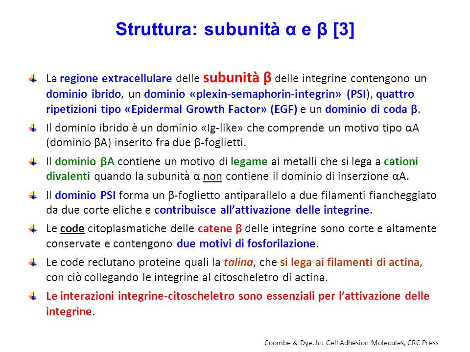 Struttura: subunità α e β [3]